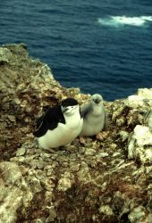 A chinstrap penguin with chick. Photo