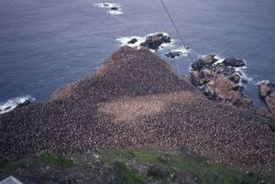 Overlooking a penguin colony on the rocky coast of Seal Island. Photo