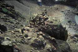 Chinstrap penguins at North Cove, Seal Island. Photo