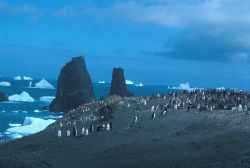 Chinstrap penguins, Seal Island, Antarctica. Photo