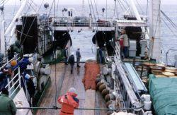 Deploying trawl off the R/V Professor Siedlecki in 1986. Photo