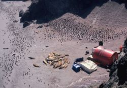 Southern elephant seals and chinstrap penguins at the Seal Island field camp Photo