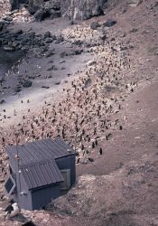 An observation shack at a chinstrap penguin colony on Seal Island. Photo