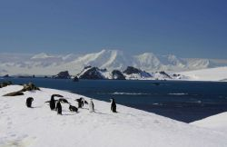 A group of chinstrap penguins near an icy bay, South Shetland Islands. Photo