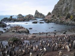 A chinstrap penguin colony at North Cove, Seal Island, with Antarctic fur seals nearby. Photo