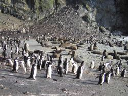 Antarctic fur seals and chinstrap penguins on Seal Island. Photo