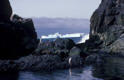 Chinstrap penguins and an Antarctic fur seal at Seal Island, Antarctica. Photo