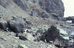 An observation shack at a chinstrap penguin colony on Seal Island Photo