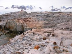A gentoo penguin colony at Petermann Island, 2006. Photo