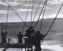 Live-bait fishing for skipjack off Kauai Photo
