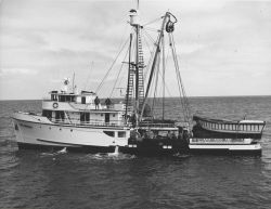 The contemporary seiner Cape Beverly on maiden voyage after conversion Photo