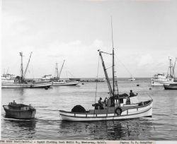 Squid fishing boat MARIA N. Photo
