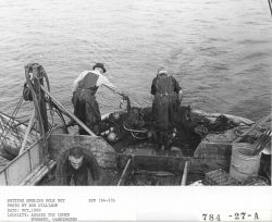 Setting net for English sole aboard the fishing vessel LEMES Photo
