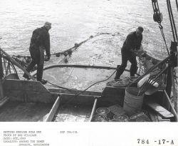 Setting English sole net aboard the fishing vessel LEMES Photo