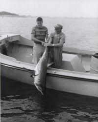 Mackerel shark. Photo