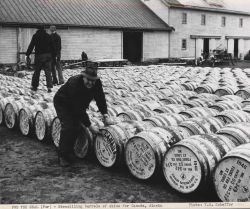 Stencilling barrels of fur seal skins for shipment to either Alaska or Canada Photo