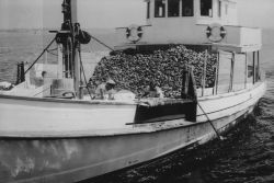 Oyster boat Photo