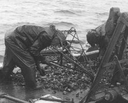 Oyster dredge on Chesapeake Bay skipjack. Photo