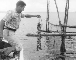 Oyster aquaculture studies Photo