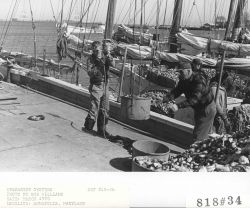 Unloading oysters Photo