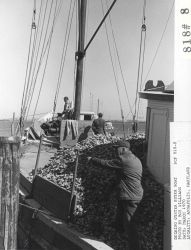 Docking an oyster buyer boat at Annapolis Photo
