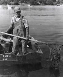 Maine sea urchin fisherman Photo