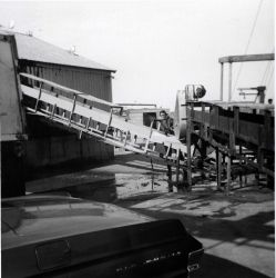 Conveyor system used to move whiting from the F/V JOSEPH & LUCIA II into the plant at Ocean Side Fisheries Photo
