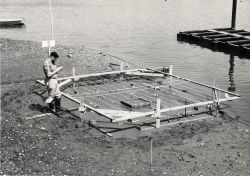 Experimental chemical barrier constructed in intertidal zone in Milford Harbor Strings over the bottom were needed to keep sea gulls away from the ani Photo
