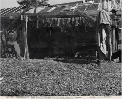 Native American fish drying rack Photo