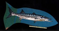 Art - Great barracuda (Sphyraena barracuda) Photo