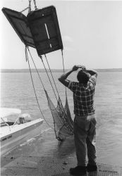 Alewife research - Setting otter trawl net from VIMS ferry boat LANGLEY Photo