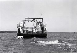 Alewife research - Hauling experimental mid-water trawl aboard VIMS ferryboat LANGLEY. Photo