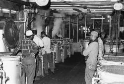 Alewife canning - Line of cookers for handling canned alewives and canned alewife roe at Haynie Cannery. Photo