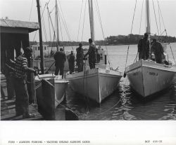 Alewife fishing - Fishing vessels waiting to unload alewife catch at Haynie Cannery Photo