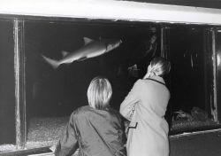 Visitors enjoying the BCF aquarium Photo