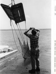 Alewife research - Setting otter trawl net from Virginia Institute of Marine Science ferry boat LANGLEY. Photo