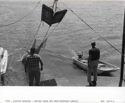 Alewife research - Setting trawl net from Virginia Institute of Marine Science ferry boat LANGLEY. Photo