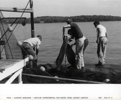 Alewife research - Hauling experimental mid-water trawl net aboard Virginia Institute of Marine Science ferry boat LANGLEY. Photo