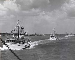 Parade of shrimp boats and other fishing vessels at the Annual Blessing of the Fleet Photo