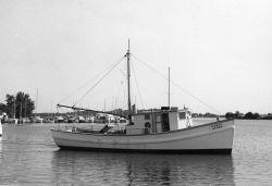 The BCF fishing vessel ALOSA Photo