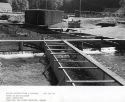 Salmon holding pens and raceway Photo
