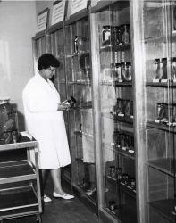 Museum technician examining specimens in Station museum. Photo