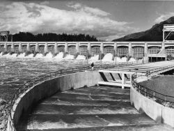 Bonneville Dam and fishway Photo