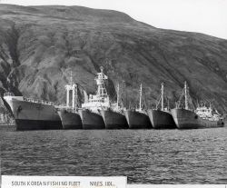South Korean fishing fleet with factory ship and catcher boats Photo