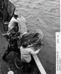 Setting otter trawl net Photo