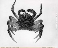 Unidentified crab Photo