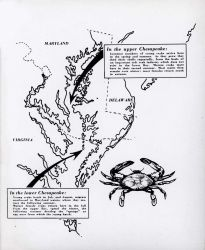 Diagram of blue crab life history in Chesapeake Bay Photo