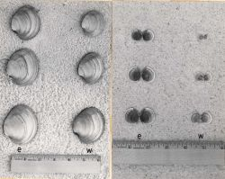 The smallest, average, and largest hard clams and cockles, grown for the same length of time at two apprently similar stations, illustrating the super Photo