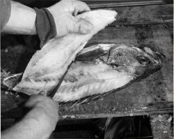 How to fillet rockfish - Final cut - left hand side Photo