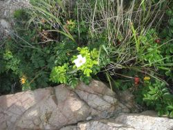 A pretty white flower in Bluff Point State Park Photo